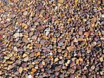 Miljoonat aallot ovat kiilloittaneet miljoonat kivet sileiksi.